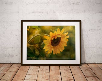 Sunflower Photography, Summer Home Decor, Country Wall Art Print, Sunflower Kitchen Decor, Yellow Green Wall Decor, Sunflower Gift