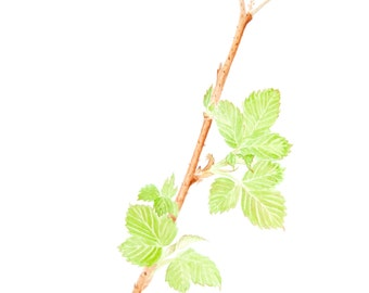 Raspberry Leaf Greeting Card