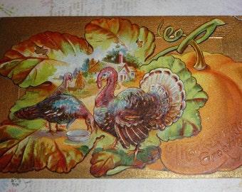 Turkey Scene on a BigLeaf With Orange Pumpkin Antique Thanksgiving Postcard