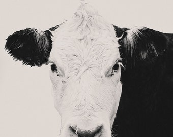 Cow Photography, Black & White, Home Decor, Decor, Wall Decor, Wall Art, Farmhouse Decor, Farm Life, Photography, Print