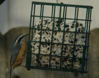 Mealworm Suet – Mealworm – Window Bird Feeder – Chicken Feeder – Bird Nest