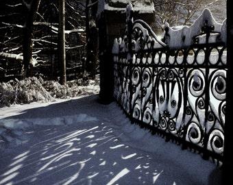 Winter Lace - Nature Fine Art Photography