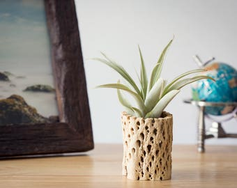 Cholla Air Planter, FREE SHIPPING, Air Plant Holder, Cute Gift, Home Decor, Office Plant Gift, Shelf Decor, Small Plant, Unique Gift Plants