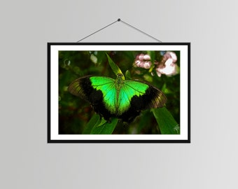 Butterfly in Nature in Singapore // Butterfly Photo - Butterfly Wall Decor - Butterfly Bedroom Art - Nature Photograph - Butterfly Picture
