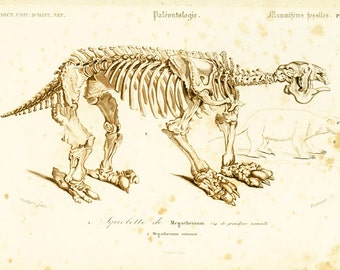 1861 Megatherium Fossil, Mammal Skeleton by Ch. Orbigny, Original zoological Print, Paleontology lithograph, Collectable victorian engraving