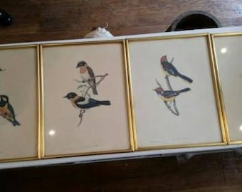 4x Gould and Richter Bird Litho's 1x A. Marlin bird litho. Very Rare