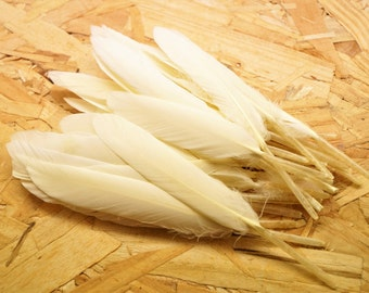 Set of 10 natural ivory, beige, tinted goose feathers, 10-15 cm