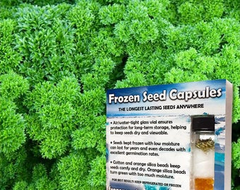 Double Curled Parsley Seeds (Petroselinum crispum crispum) 20+ Rare Seeds in Frozen Seed Capsules plus FREE 6 Variety Seed Pack!