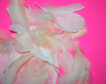 Parrot Feather,Bird Feathers~Lot of 25, Moluccan Cockatoo Parrots~Peach, for Jewelry,Crafts,Earrings,Art,Fishing Lures,Cat Toys*USA Seller*