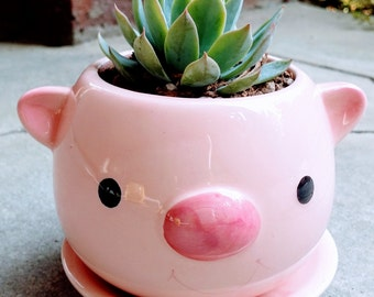 Cute PIG Planter with Succulent (PLANT INCLUDED!)