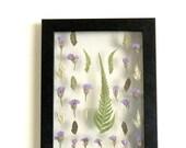 Pressed Botanicals. Float Frame Botanical Art. Real Hand Pressed Flowers. 3D Small Herbarium Specimen.