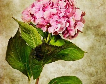 Hydrangea,Flowers,Home Decor,Still Life Art,Creative,Conceptual,Photography,Rustic,Vintage,Wall Art