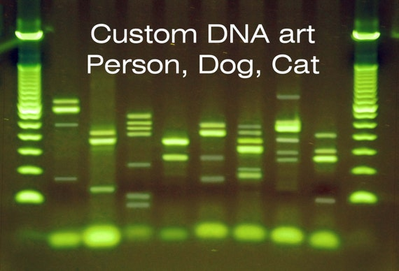 Dogs cats humans dna canvas metal personalized genetics art for Personalized dna art