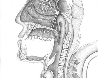 Face Cross-section Illustration
