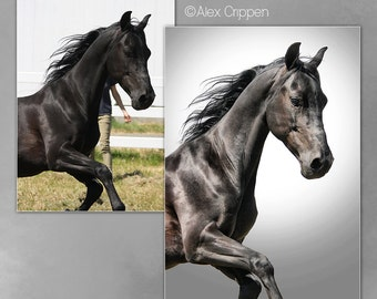 Custom Photo Manipulation Artwork - Background Removal