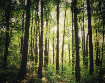 Peaceful Summer Woods