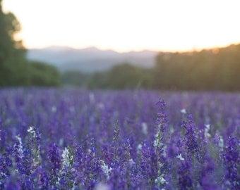Purple Field Sunset Vertical
