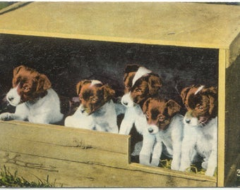 Five Cute Puppies in a Wooden Crate Vintage Greetings POSTCARD Post Card