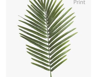 Download poster of a Palm tree, tropical leaf, decoration, Scandinavian