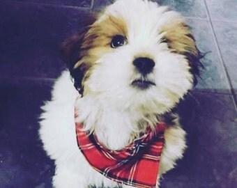 Dog bandana.  Tartan bandana.  Dog neckerchief.  Sizes available small, medium and large. Red tartan.  Red dog bandana.  Dog bandanas.