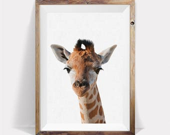 Giraffe Animal Photo,Giraffe Art,Safari Nursery Art,Giraffe Large Wall Art,Giraffe Photo,Printable Giraffe Art,Giraffe Girl Nursery,Giraffe
