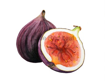 Fig Giclee Print from Original Watercolor, Kitchen Decor, Wall Art 8 x 8 Inch
