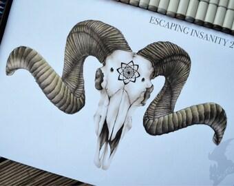 Taxidermy Ram Skull Illustration