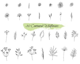 Ornate sketch of plants - vector clip art of plants/ Monochrome image of wild flowers and herbs. Black and white elements for coloring