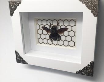 REAL Blue carpenter bee