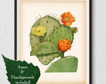 Botanical art, Vintage cactus print, 8x10 print, 11x14 print, A3, A4, Instant download, Printable wall art, Opuntia print, Wall decor, #85