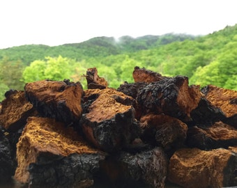 Raw Wild VERMONT Natural CHAGA Mushroom *Choose Your Weight & Style*