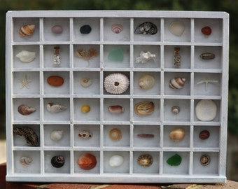 Letterpress Printers Tray White Coastal Art Seashells and Beach Finds Shell Display