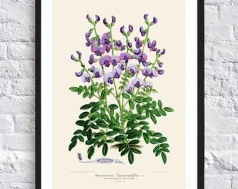 Blue flower print botanical print illustrations blue flowers print vintage antique print wall art print herb art home kitchen decor poster