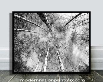 Black and White Woodlands Print, Woodlands Art, Woodlands Birch Tree Art, Forest Landscape, Forest Artwork Prints, Instant Tree Artwork