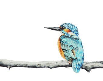 Kings of the Orient   LIMITED EDITION   Kingfishers Print   Wall Art   Colourful bird   Fine Art   from Original Drawing   Painting