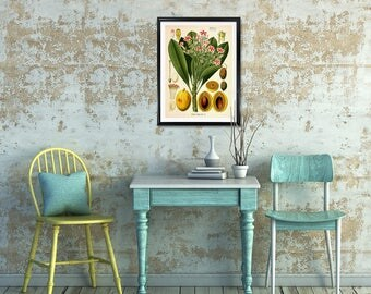 Cerbera Venenifera Botanical Print, Cerbera Tanghin Hook, Mango print, vintage print, medical botanicals, vintage botanicals, kitchen art