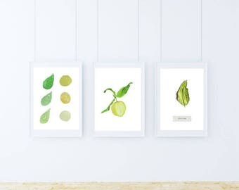 A5, lemon, Wall art, Decoration, Home decor, Print, Mural Art, botanical, watercolor, herbarium, hand drawn