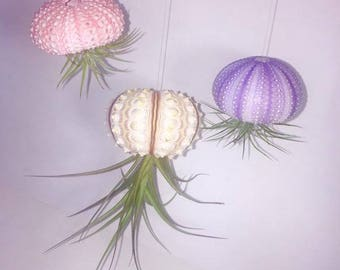Hanging sea urchin air plant jelly fish