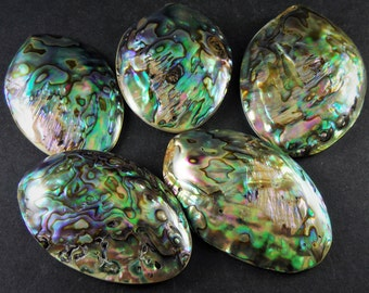 5 Beautiful Natural Rainbow Shiny Polished Paua Abalone Shells With Mother of Pearl Carbochon Mineral Seashells