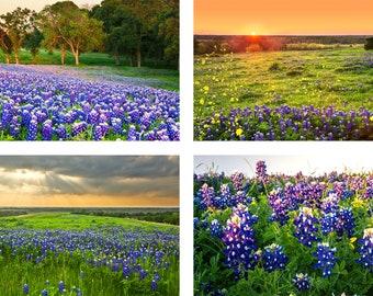 "Texas Bluebonnets Photo Set | ""Bluebonnet Sunset""  | Texas Wildflowers Wall Art | Four Print Set - Bluebonnet Set - Bluebonnet Gift - Texas"