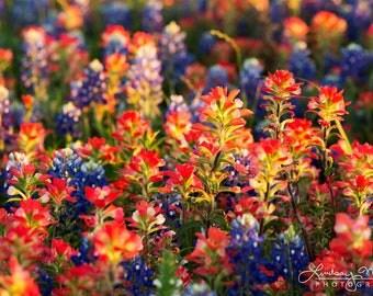 "Texas Wall Art Photo   ""Wildflower Detail""   Texas Wildflowers Wall Art   Texas Bluebonnets - Indian Paintbrushes - Texas Home Decor Art"