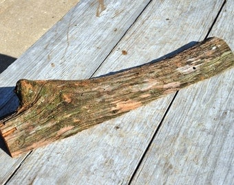 Knot Holed, Weathered, Red Oak Slab