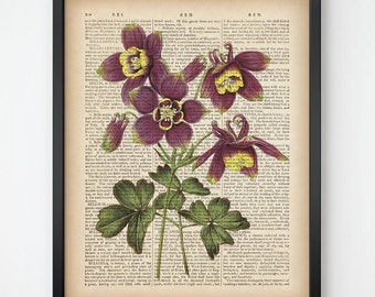 Botanical print, Columbine print, Printable botanical art, Aquilegia, Print on dictionary, Vintage art print, Instant download, 8x10 11x14