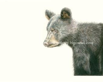 Black Bear Cub - Fine Art Print