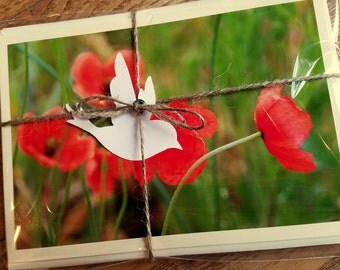 Poppies Note Card Pack
