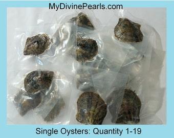 Akoya Oyster w/ Genuine Pearl! (Unopened /Vacuum Packed)