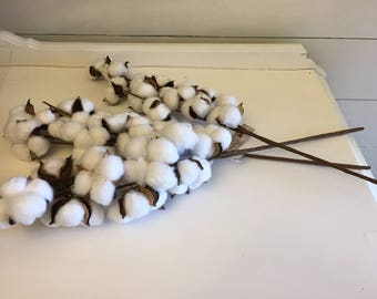 set of 3 cotton boll stems