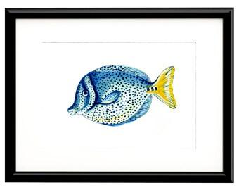 """Yellowtail Surgeonfish, Fine Art Print, 10""""x8"""""""