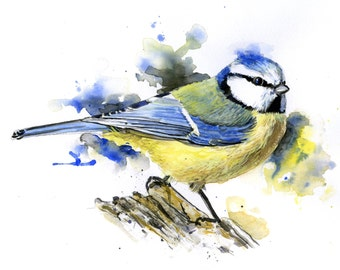 PRINT BIRD Watercolour Limited Edition & Bird Illustration. Blue Tit.