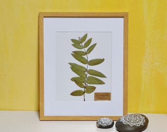 Herbarium, Real Pressed Framed Eucalyptus Branch, Eucalyptus Globuls, Natural Wall Decor, Floral Art, Nature Lover Gift, Framed Nature,
